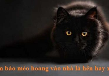 Điềm báo mèo hoang vào nhà là hên hay xui ?