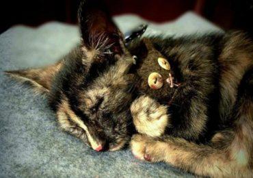 Con mèo chết đánh đề con gì, số mấy ?