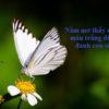 Nằm mơ thấy bướm là điềm gì, đánh đề con gì?