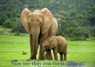 Nằm mơ thấy con voi là điềm gì, đánh đề con gì?