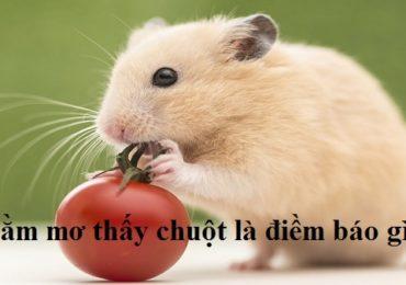 Nằm mơ thấy chuột đánh đề con gì, số mấy?