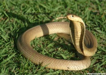 Đi gặp thấy rắn đánh đề con gì, số mấy ?