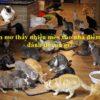 Nằm mơ thấy nhiều mèo vào nhà là điềm gì, đánh đề con gì?