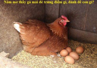 Nằm mơ thấy gà mái đẻ trứng là điềm gì, đánh đề con gì?
