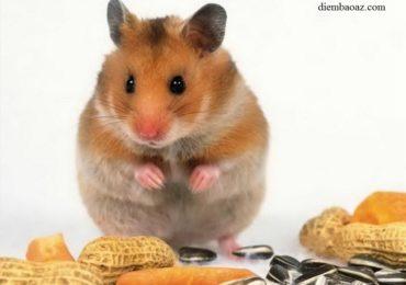 Nằm mơ thấy bắt chuột bị cắn là điềm gì, đánh đề con gì?
