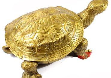 Nằm mơ thấy rùa vàng khổng lồ là điềm gì, đánh đề con gì?