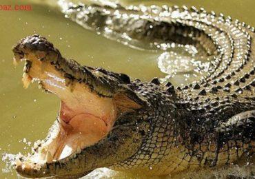 Nằm mơ thấy bị cá sấu rượt đuổi cắn là điềm gì, đánh đề con gì?