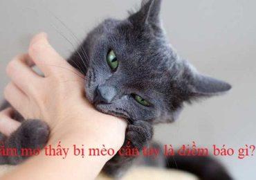 Nằm mơ thấy bị mèo cắn tay chân là điềm gì, đánh đề con gì?