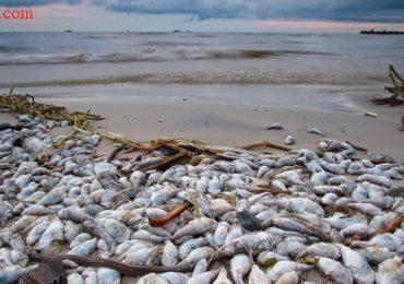 Nằm mơ thấy cá chết nhiều là điềm gì, đánh đề con gì?