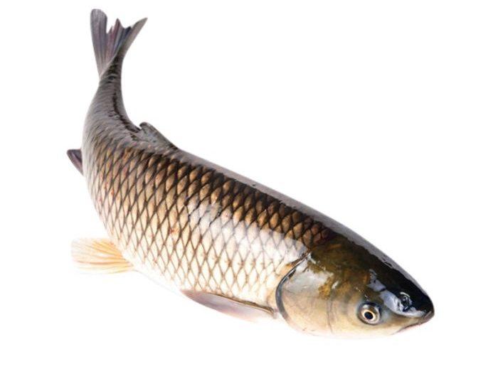 Nằm mơ thấy cá trắm, cá mè là điềm gì, đánh đề con gì?