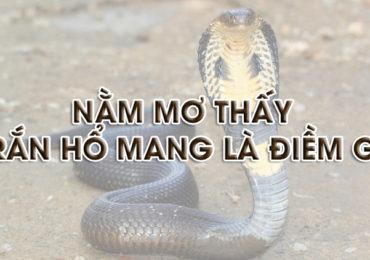 Nằm mơ thấy rắn hổ mang đuổi cắn là điềm gì, đánh đề con gì?