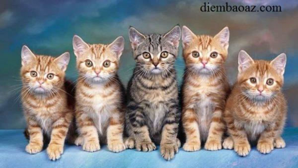 Nằm mơ thấy mèo đẻ con là điềm gì, đánh đề con gì?