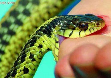 Nằm mơ thấy rắn cắn người khác là điềm gì, đánh đề con gì?