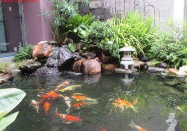 Nằm mơ thấy ao cá là điềm gì, đánh đề con gì?
