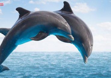Nằm mơ thấy cá heo, cá voi, cá mập đánh con gì, số mấy, điềm báo gì?