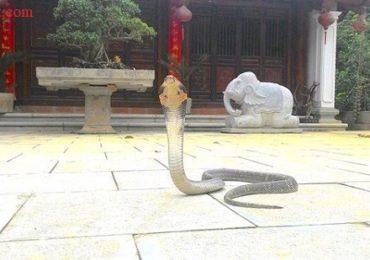 Nằm mơ thấy rắn vào nhà cắn người thân là điềm gì, đánh đề con gì?
