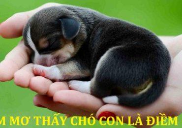 Nằm mơ thấy chó con, chó màu đen, trắng, vàng là điềm gì, đánh đề con gì?