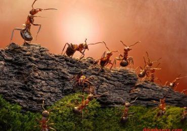Kiến bò vào nhà, kiến bò lên giường là điềm báo gì?