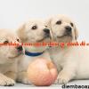 Nằm mơ thấy 3 con chó là điềm gì, đánh đề con gì?