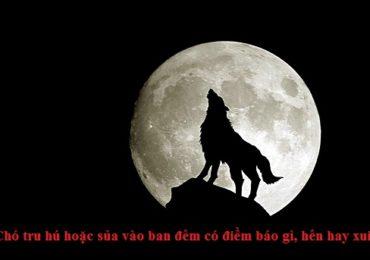 Chó tru hú hoặc sủa vào ban đêm có điềm báo gì, hên hay xui ?