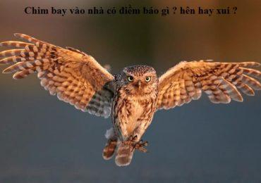 Chim bay vào nhà có điềm báo gì ? hên hay xui ?