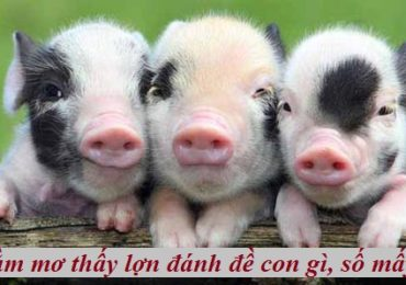 Nằm mơ thấy lợn đánh đề con gì, số mấy ?