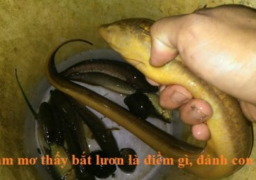 Nằm mơ thấy bắt con lươn là điềm gì, đánh đề con gì?