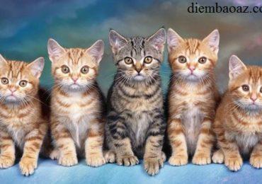 Nằm mơ thấy mèo đẻ con là điềm gì, tốt hay xấu, đánh đề con gì?