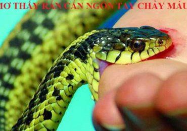 Nằm mơ thấy bị rắn cắn vào ngón tay chảy máu là điềm gì, đánh đề con gì?