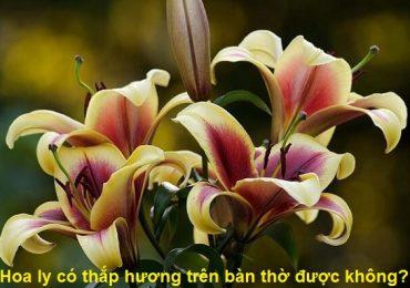 Có nên thắp hương Hoa Ly, cắm hoa ly trên bàn thờ không?