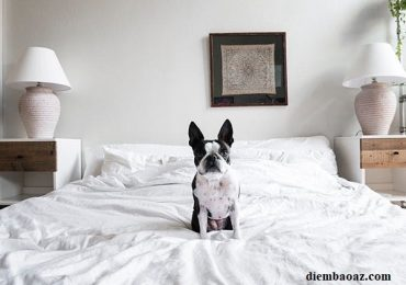 Chó leo lên giường là điềm báo gì, hên hay xui, đánh con gì, số mấy?