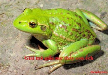 Nằm mơ thấy con ếch là điềm báo gì? Đánh đề con gì? Số mấy?
